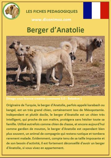 fiche chien pdf pedagogique berger d'anatolie origine caractere comportement