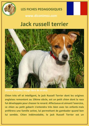 fiche chien pdf jack russel terrier caractere origine comportement poil