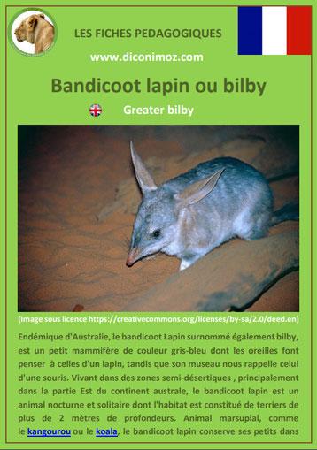 fiche animaux pdf australie bandicoot lapin bilby a telecharger et a imprimer