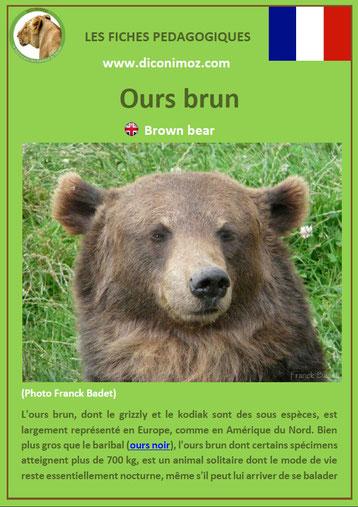 fiche animaux pdf ours brun ursides