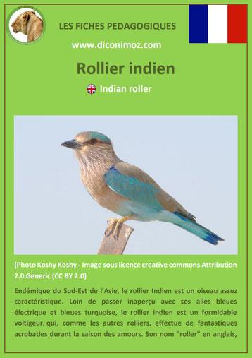 iche animaux animal pedagogique oiseaux pdf rollier indien ecole primaire college svt