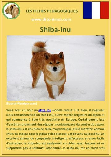 fiche chien pdf race shiba inu comportement origine caractere soin poil