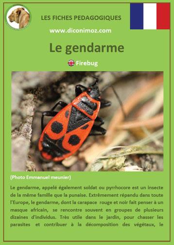 fiche animaux pdf insecte gendarme à telecharger et a imprimer