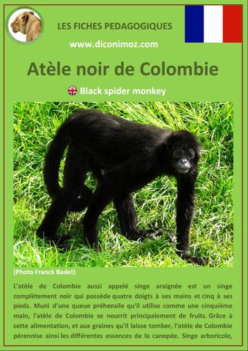 fiche animaux pdf singes atele noir de colombie