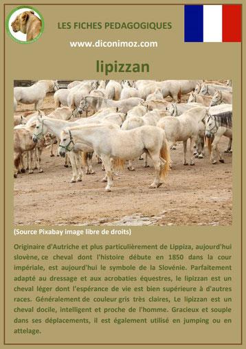 fiche cheval chevaux lipizzan origine caractere comportement robe race