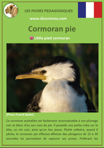 fiche animaux pdf pedagogique oiseaux cormoran pie a telecharger et a imprimer