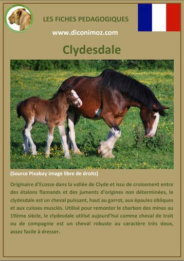 fiche animal animaux de compagnie cheval chevaux clydesdale comportement caractere origine robe