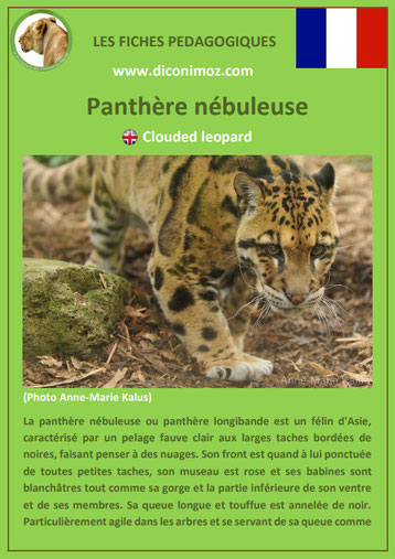 fiches animaux pdf pedgogique felins panthere nebuleuse longibande a telecharger