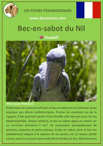 iche animaux pdf pedagogique oiseaux bec en sabot a telecharger et a imprimer