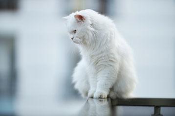 quand et comment changer la litiere du chat ?
