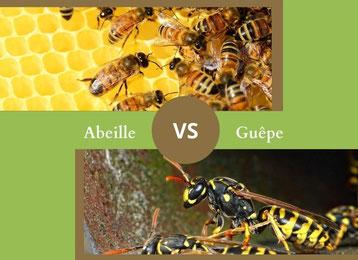ne confondez plus l'abeille et la guepe