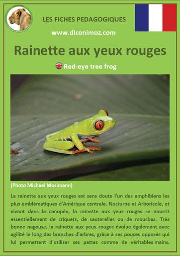 fiche animaux reptile pdf rainette yeux rouges à telecharger et a imprimer