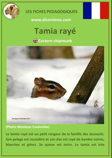 fiche animaux ecureuil tamia taille poids habitat longevite repartition comportement