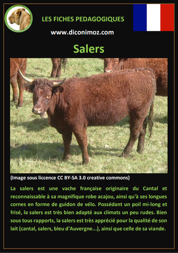 fiche animaux ferme vache salers origine caractere comportement robe race