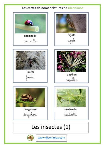cartes de nomenclature ecriture cursive et script animaux insectes 1