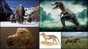 fiches animaux liste des animaux disparus dinosaures
