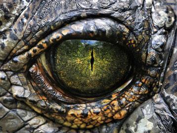 regard animal jeu devinez oeil