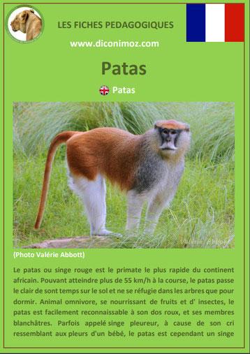 fiche animaux pedagogique singe patas pdf a telecharger et a imprimer