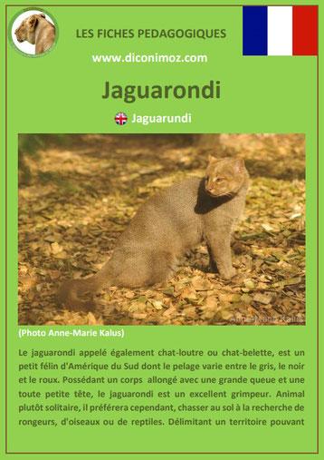 fiche animaux amazonie pdf pedagogique juaguarondi a telecharger et a imprimer