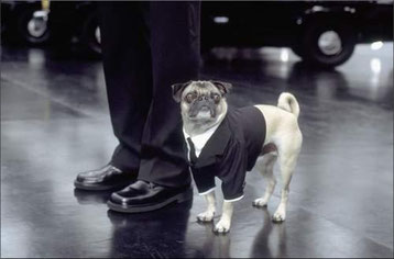 image du film men in black avec will smith chien race carlin