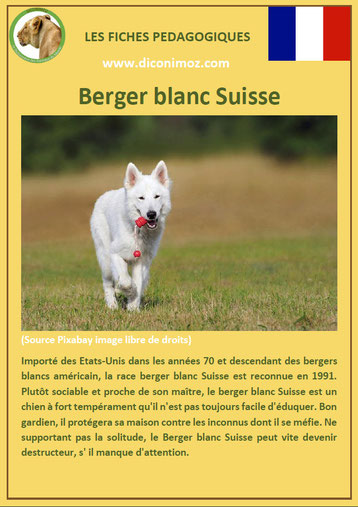 fiche chien pdf pedagogique berger blanc suisse origine caractere comportement