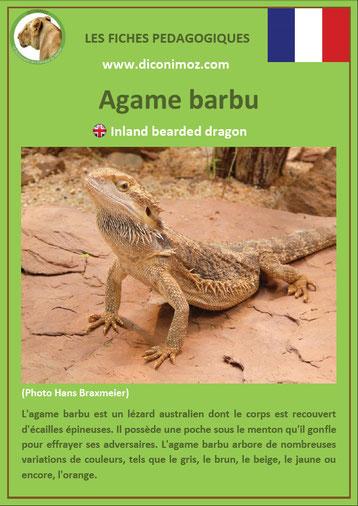 fiche animaux australie pdf agame barbu a telecharger et a imprimer