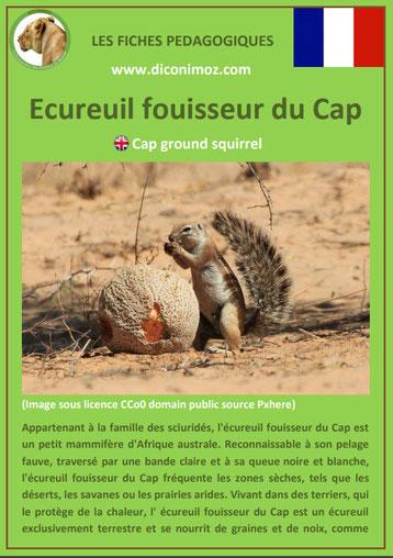 fiche animaux ecureuil fouisseur du cap taille poids habitat longevite repartition comportement