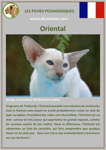 fiche chat race oriental origine comportement caractere poil sante