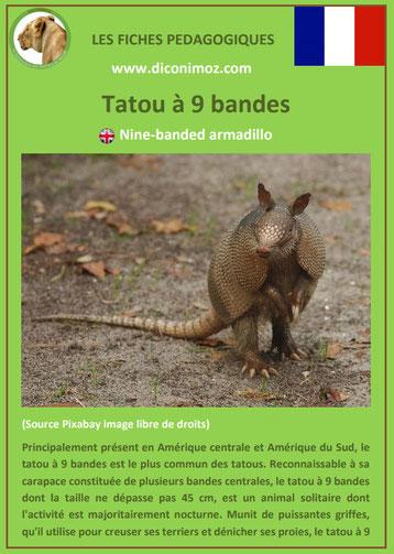 fiches animaux d'amazonie pdf tatou à 9 bandes comportement taille poids habitat reproduction alimentation