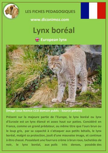 fiche animaux pédagogiques des montagnes francaises lynx boreal europeen