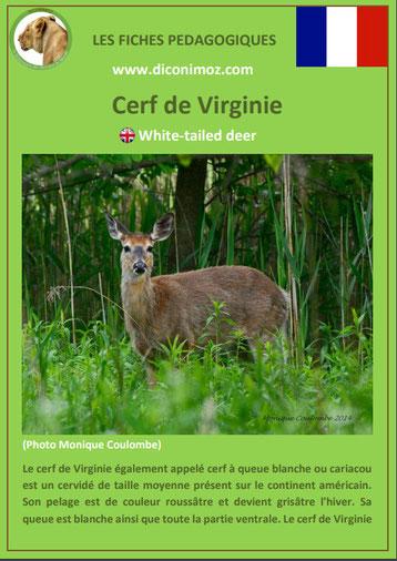 fiche animaux pdf cerf virginie comportement taille poids habitat longevite alimentation