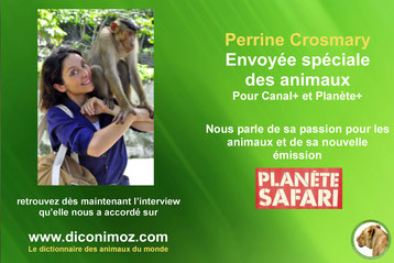 interview perrine crosmary envoye speciale des animaux planete safari canal+