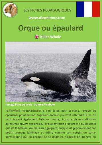 fiche animaux pedagogiques mammiferes marins pdf orque epaulard a telecharger et a imprimer