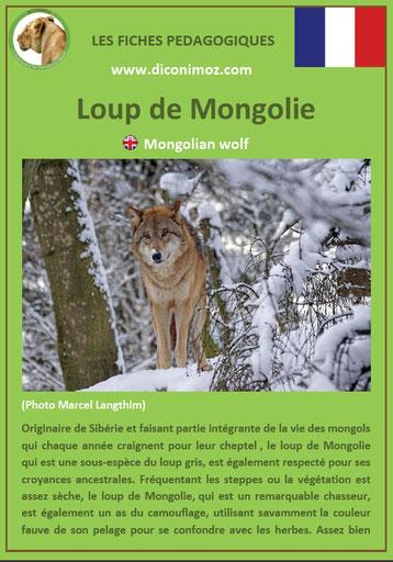 fiche animaux pdf canides loup mongolie a telecharger et a imprimer