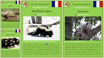 fiches animaux sauvage fiche animal à telecharger et à imprimer