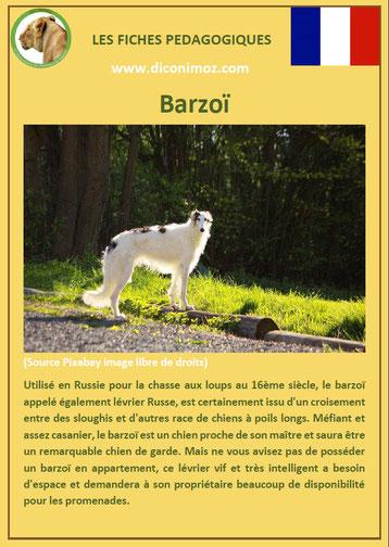 fiche animal animaux chien barzoi levrier russe comportement origine caractere sante