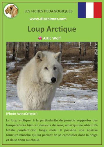 fiche animaux pdf pedagogique canides loup arctique a telecharger et a imprimer