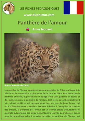 fiches animaux pdf pedgogique felins panthere de l'amour a telecharger