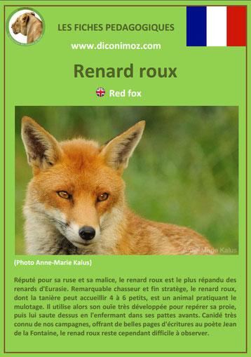 fiche animal pedagogique animaux de nos forets pdf renard roux