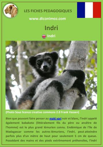 fiche animaux de madagascar pdf pedagogique indri a telecharger et a imprimer
