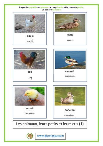 carte nomenclature animaux et petits et leurs cris