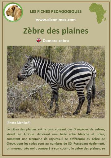 fiche animaux afrique zebre a telecharger et a imprimer