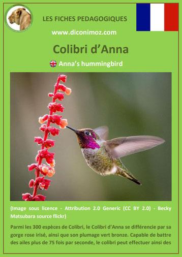 fiche animaux animal pedagogique oiseaux pdf colibri d'anna ecole primaire college svt
