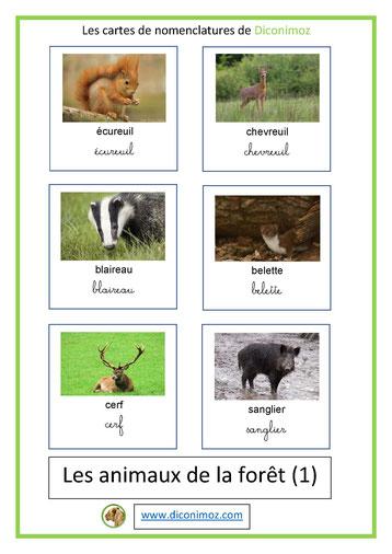 cartes de nomenclature ecriture cursive et scriptanimaux foret 1