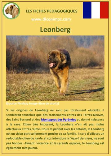 fiche chien race leonberg caractere origine comportement poil sante