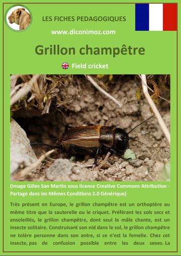 fiche animaux pdf insecte grillon champêtre à telecharger et a imprimer
