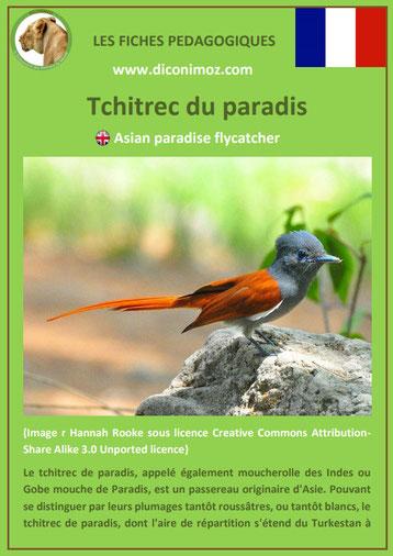 iche animaux animal pedagogique oiseaux pdf tchitrec du paradis primaire college svt