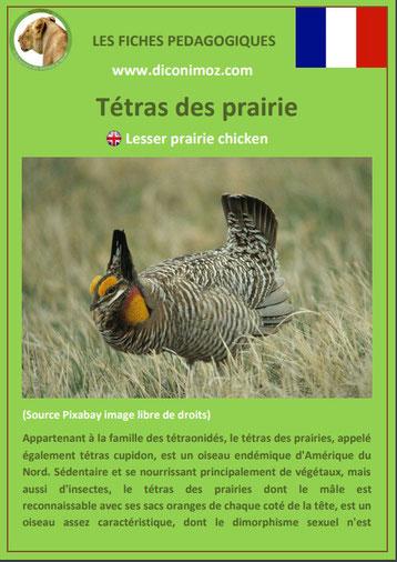 iche animaux animal pedagogique oiseaux pdf tetras des prairies ecole primaire college svt