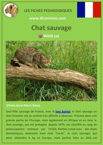 fiche animal pedagogique animaux de nos forets pdf chat sauvage