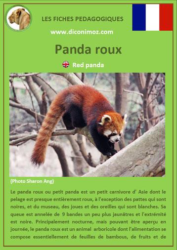 fiche animaux pdf asie panda roux à telecharger et a imprime